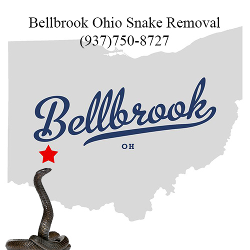 bellbrook ohio snake removal