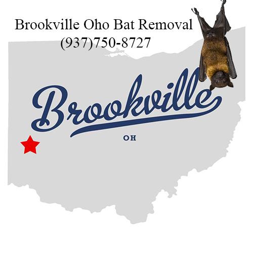 brookville ohio bat removal