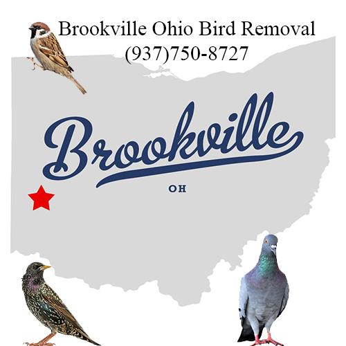brookville ohio bird removal