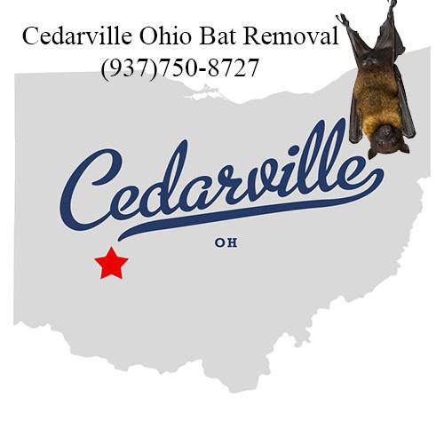cedarville ohio bat removal