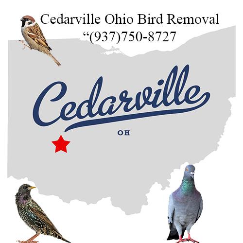 cedarville ohio bird removal