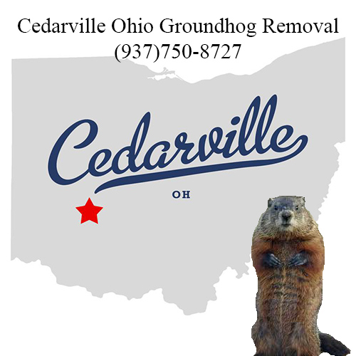 cedarville ohio groundhog removal
