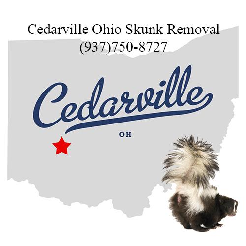 cedarville ohio skunk removal