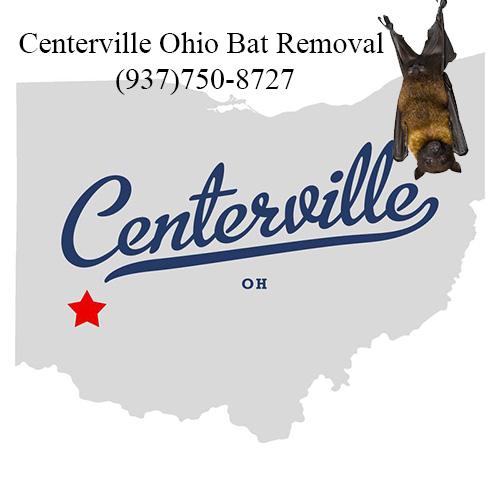 centerville ohio bat removal