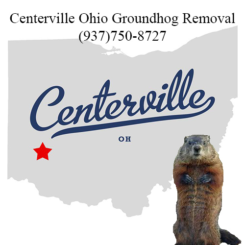centerville ohio groundhog removal