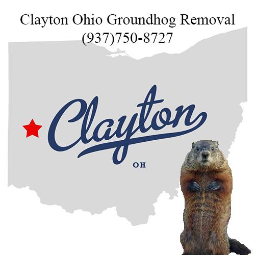clayton ohio groundhog removal