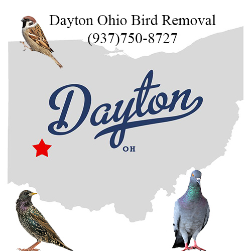 dayton ohio bird removal