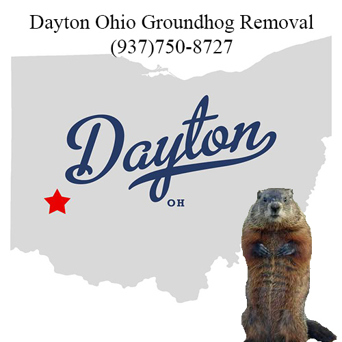 dayton ohio groundhog removal