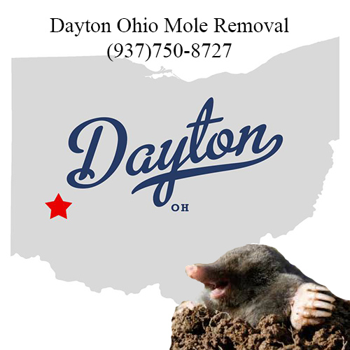 dayton ohio mole removal