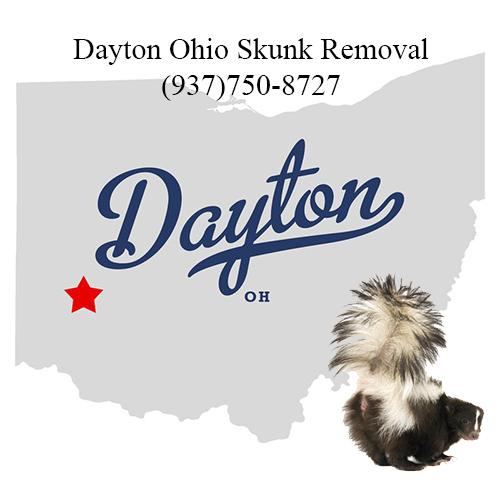 dayton ohio skunk removal