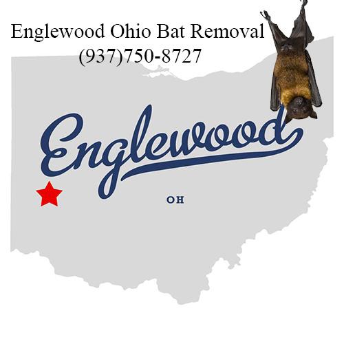 englewood ohio bat removal