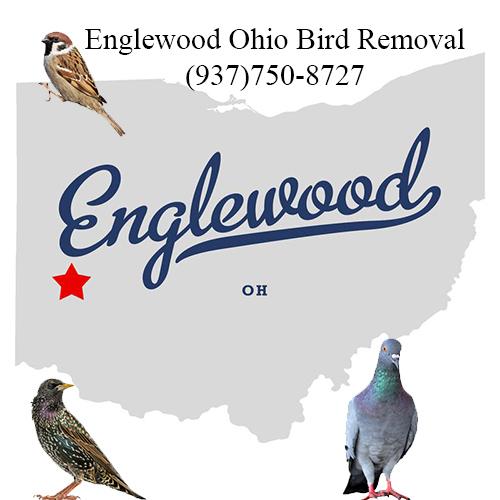 englewood ohio bird removal