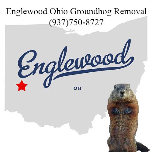 englewood ohio groundhog removal