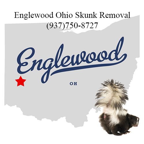 englewood ohio skunk removal