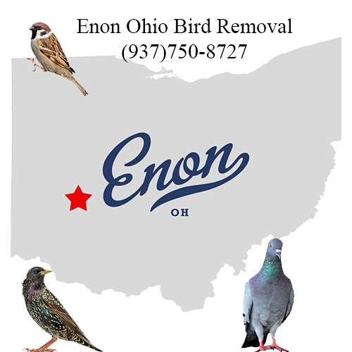 enon ohio bird removal
