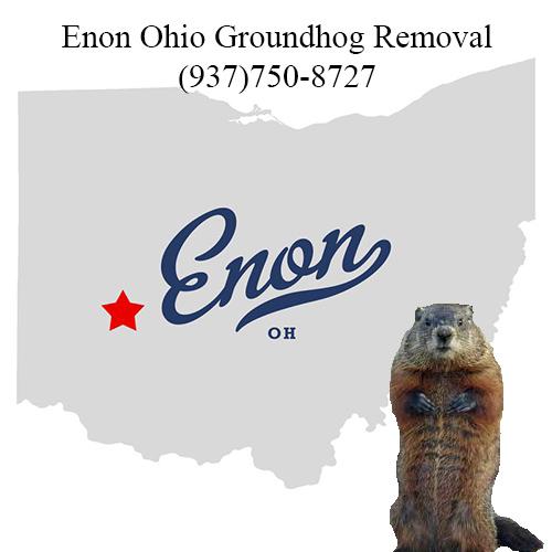 enon ohio groundhog removal