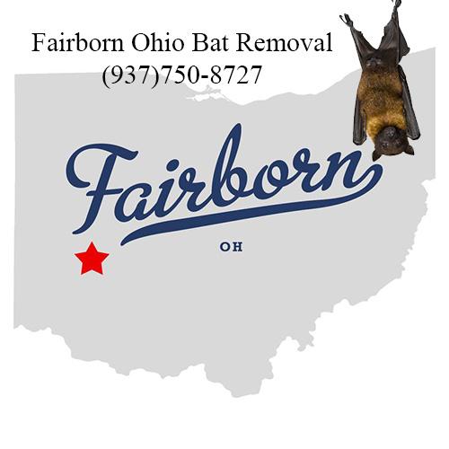 fairborn ohio bat removal