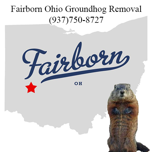 fairborn ohio groundhog removal