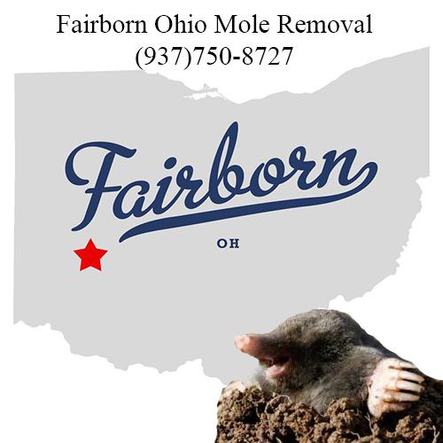 fairborn ohio mole removal