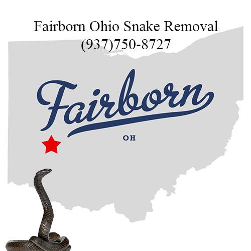 fairborn ohio snake removal