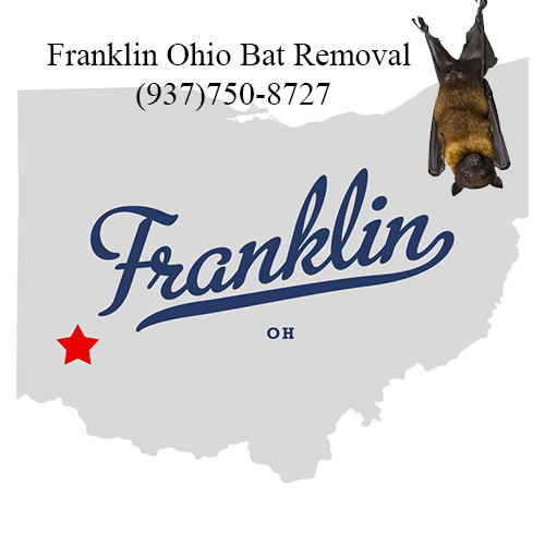 franklin ohio bat removal