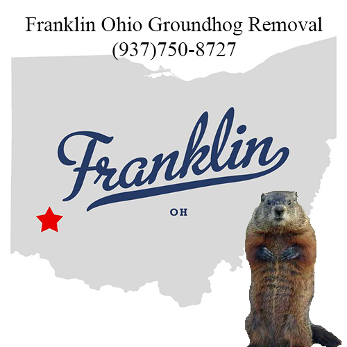 franklin ohio groundhog removal