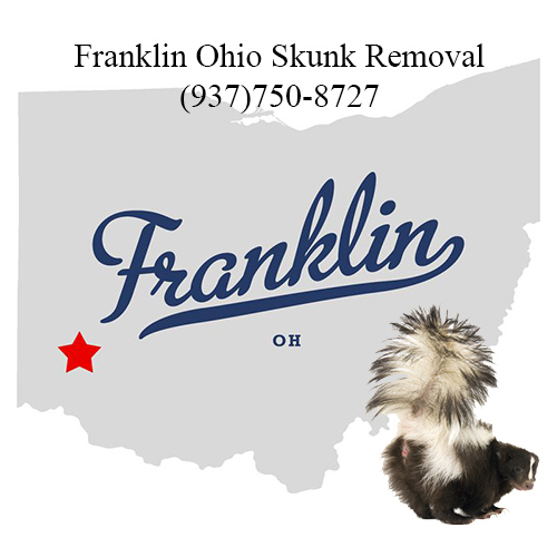 franklin ohio skunk removal