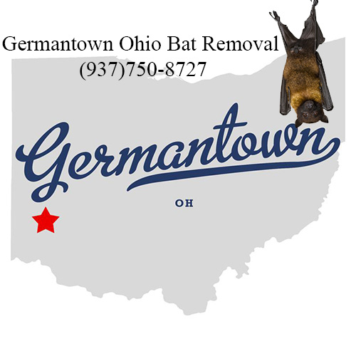 germantown ohio bat removal