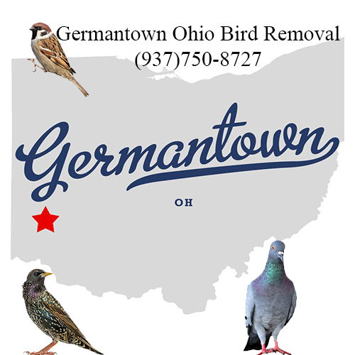 germantown ohio bird removal
