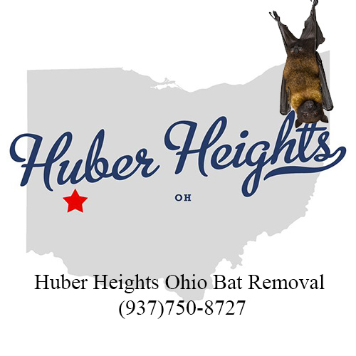 huber heights ohio bat removal