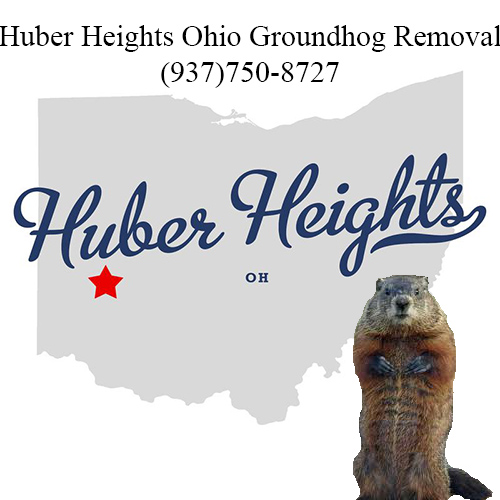 huber heights ohio groundhog removal