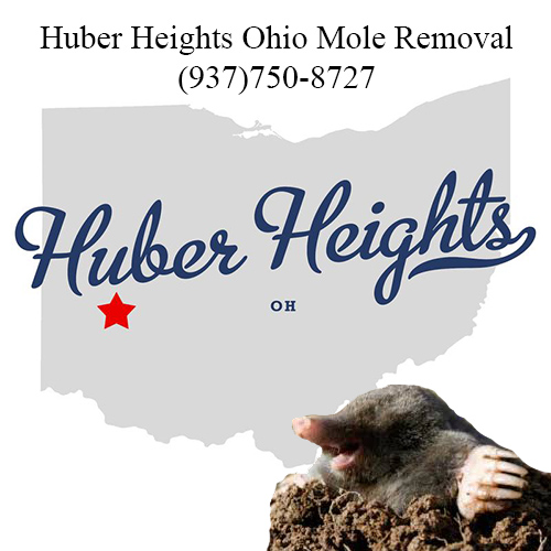 huber heights ohio mole removal