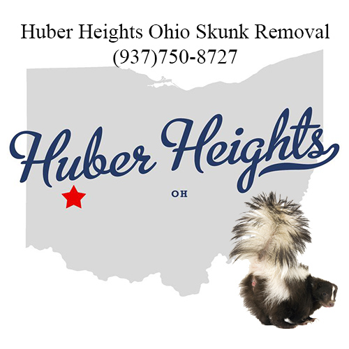 huber heights ohio skunk removal