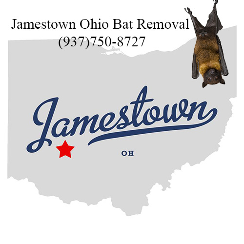 jamestown ohio bat removal
