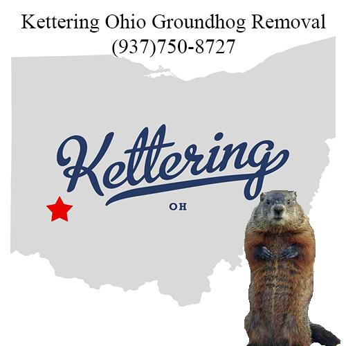 kettering ohio groundhog removal
