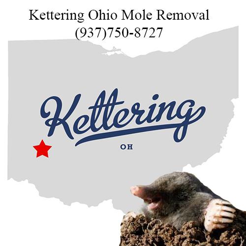 kettering ohio mole removal