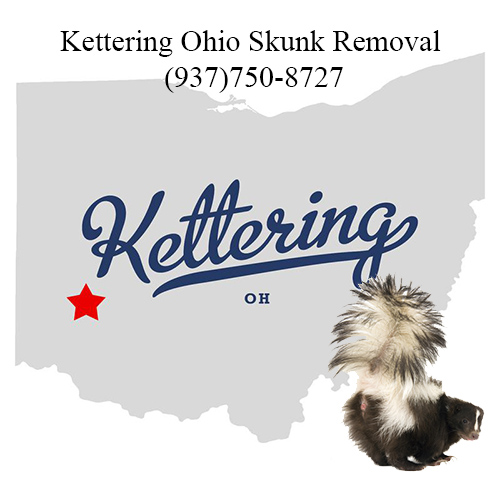 kettering ohio skunk removal