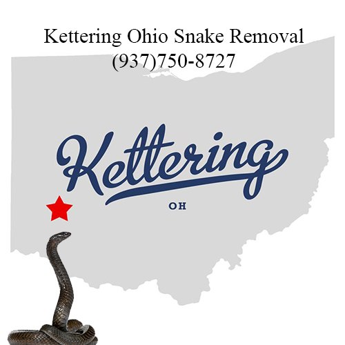 kettering ohio snake removal