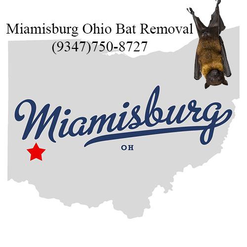 miamisburg ohio bat removal