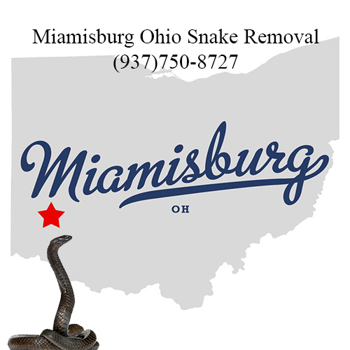 miamisburg ohio snake removal