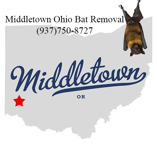 middletown ohio bat removal