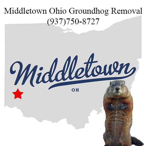 middletown ohio groundhog removal