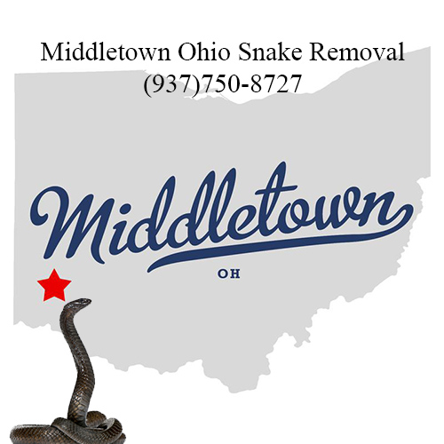 middletown ohio snake removal
