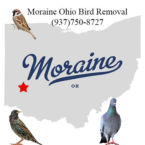 moraine ohio bird removal