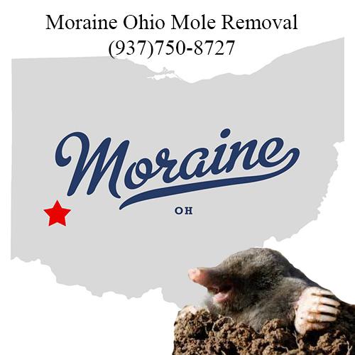 moraine ohio mole removal