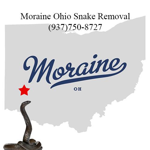 moraine ohio snake removal