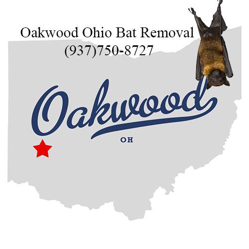 oakwood ohio bat removal