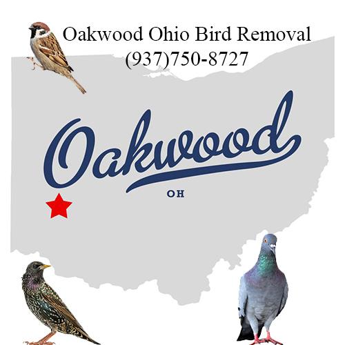 oakwood ohio bird removal