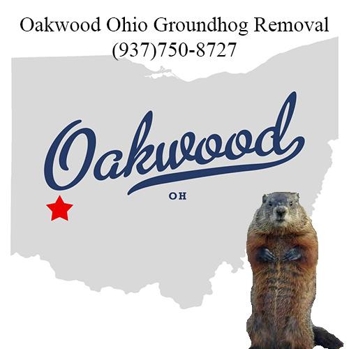 oakwood ohio groundhog removal