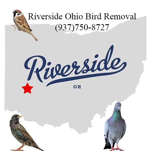 riverside ohio bird removal